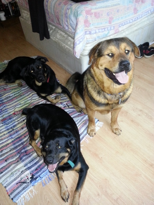 Honey with Fudge and Ronnie, her adopted sister and brother. So many smiles!