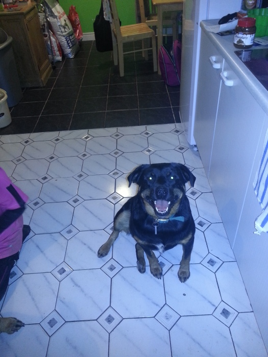 A happy girl after her Adoption day pork pie and scotch egg this evening.